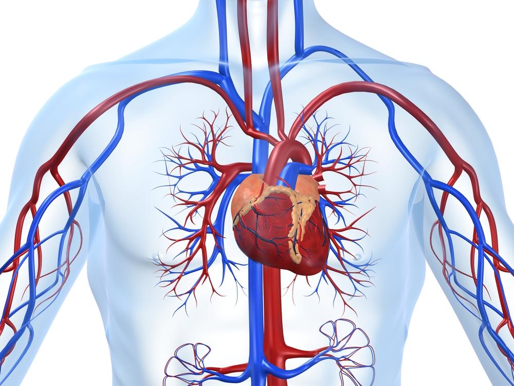 Ишемическая болезнь сердца ИБС